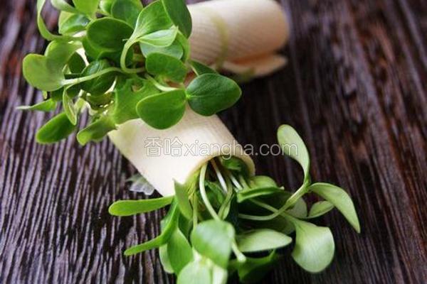 香椿苗豆卷