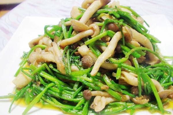 沙茶水莲海鲜菇