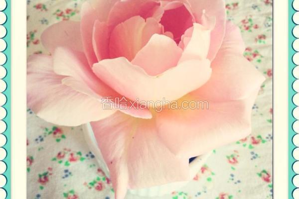 玫瑰花冰淇淋