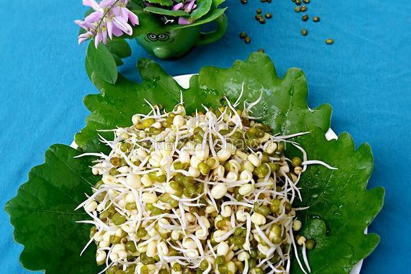 自制绿豆芽