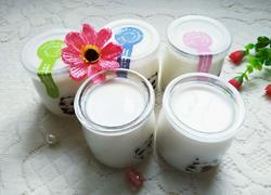 原味自制酸奶