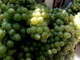 自酿葡萄酒的做法[图]