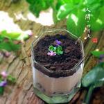 酸奶盆栽的做法[图]