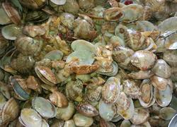 家常红烧花蛤