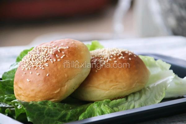 椰香汉堡胚(波兰种)