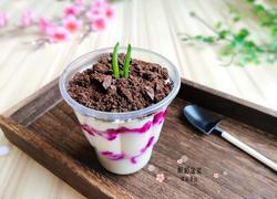 火龙果酸奶盆栽