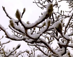 第二場雪[圖]