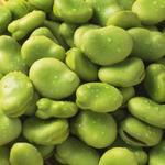 蚕豆[图]