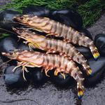 海虾[图]