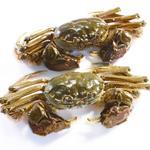 河蟹[图]