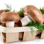 蘑菇[图]