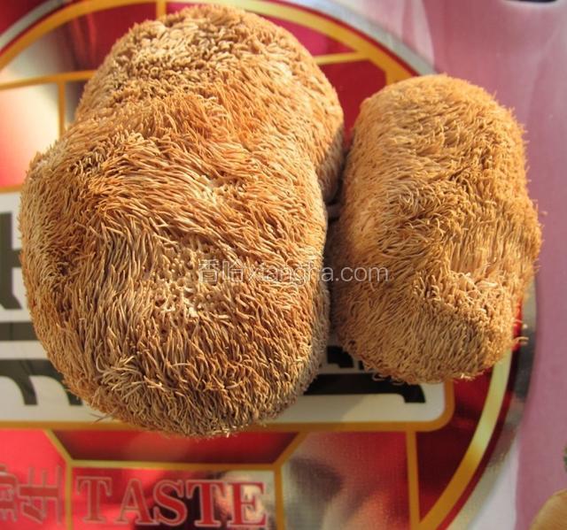 晋城猴头菇