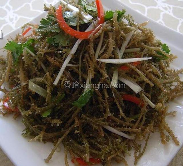 野生鹿角菜