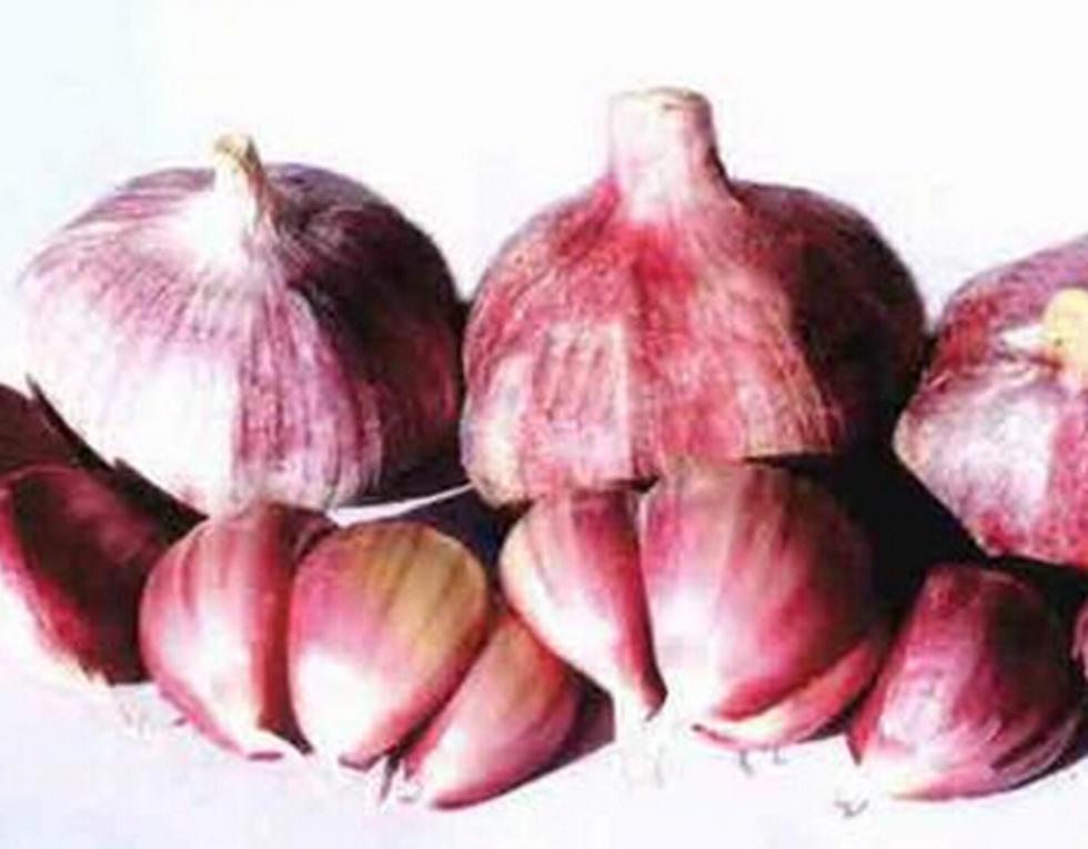 民乐紫皮大蒜