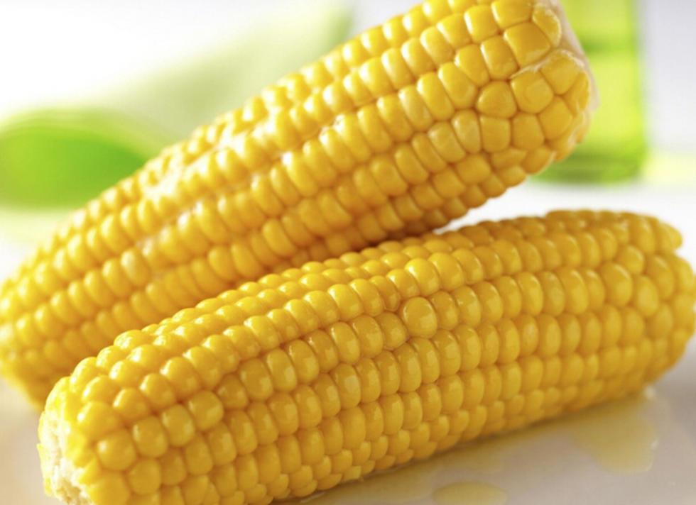 公主岭玉米
